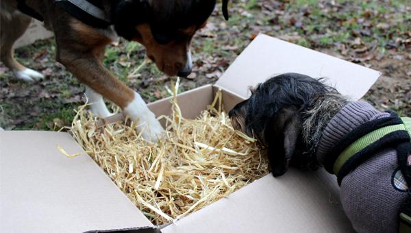 hunde-kistenspiel