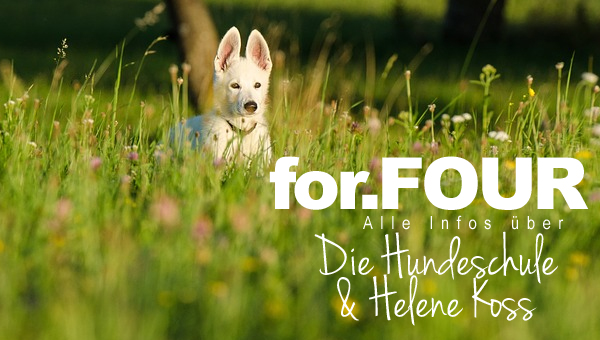 infos-forfour-hundeschule-rostock