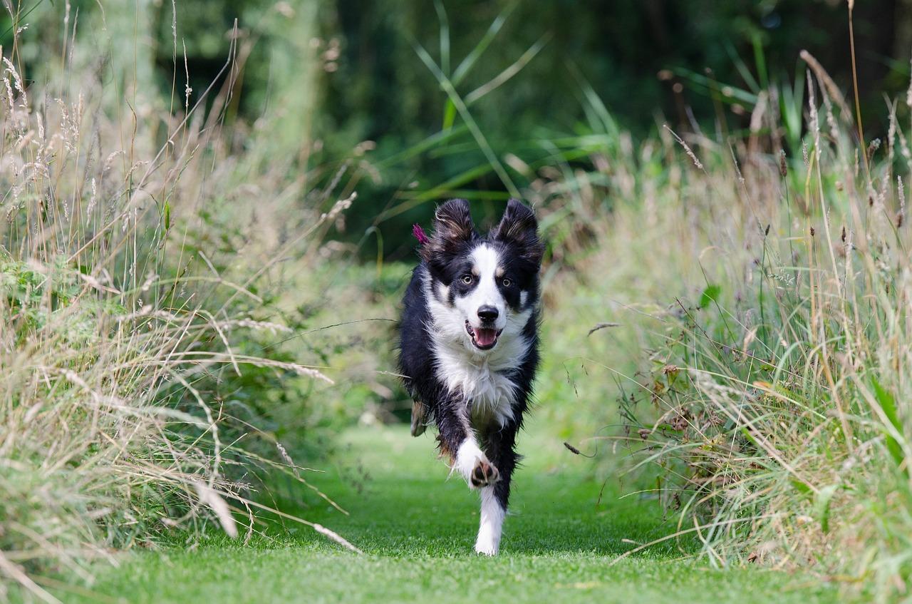 Hundeschule rückruf rostock
