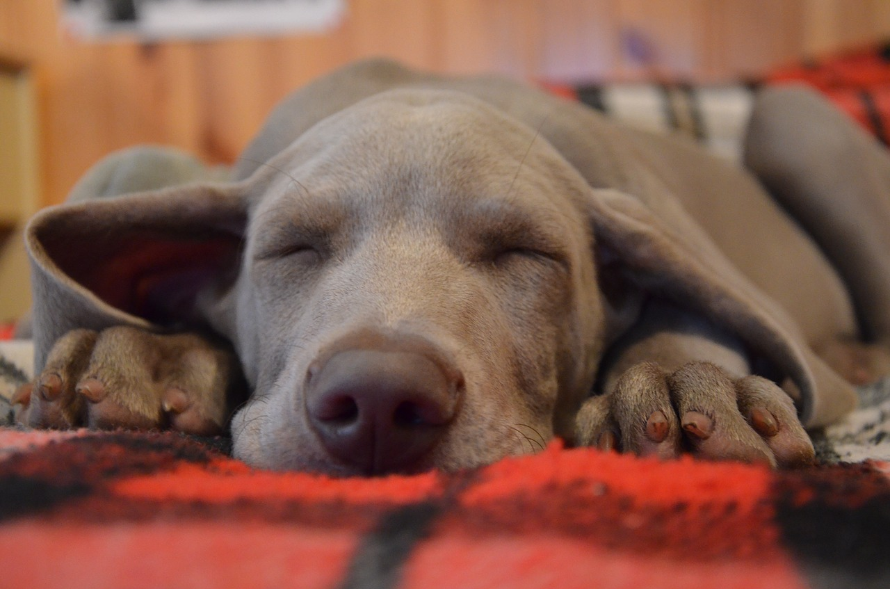 Entspannung Hund