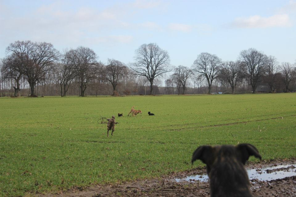 Anti Jagd rostock