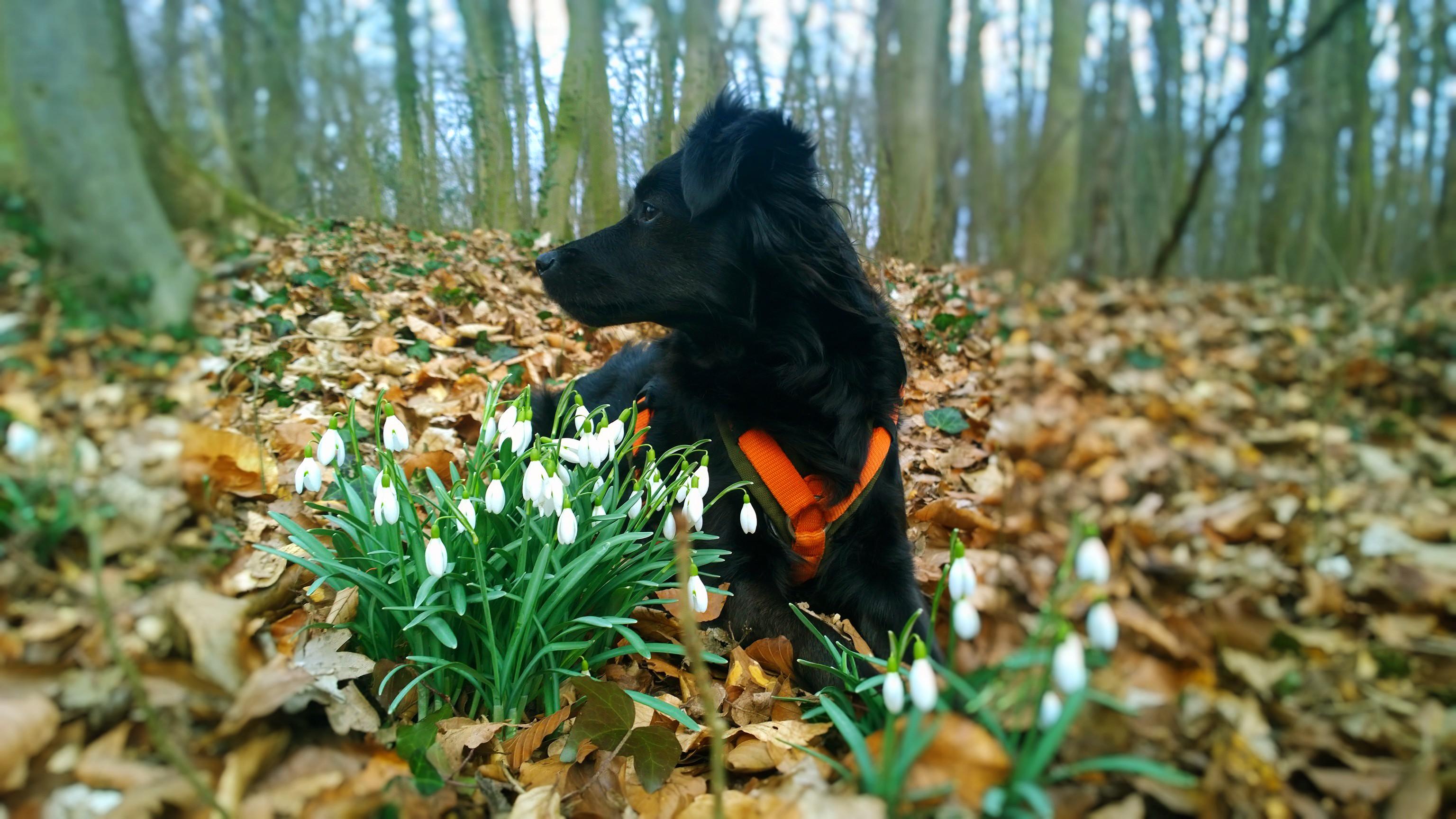 kleinhunde rostock