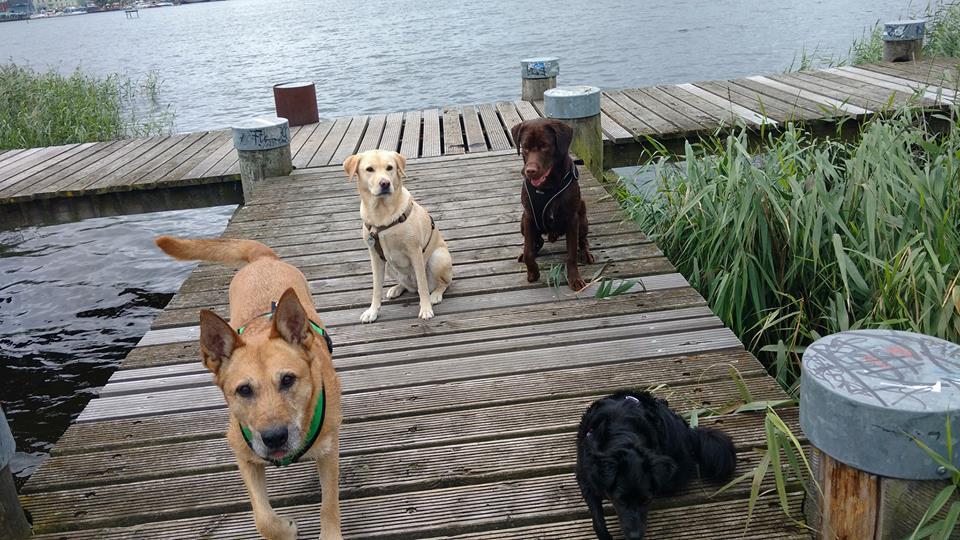 Hundeerziehung Rostock