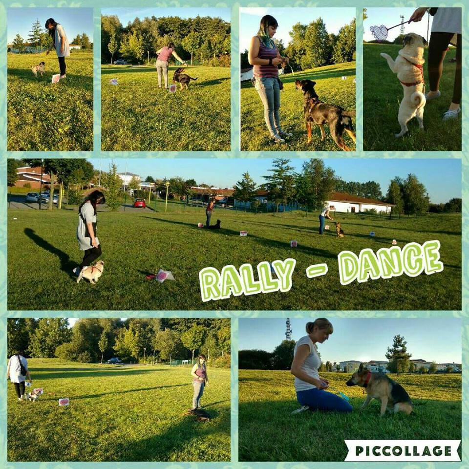Rally Dance Hund